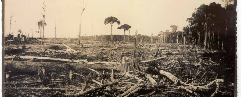 Devastation of forest in the Amazon region.