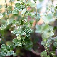 belém botanischer garten